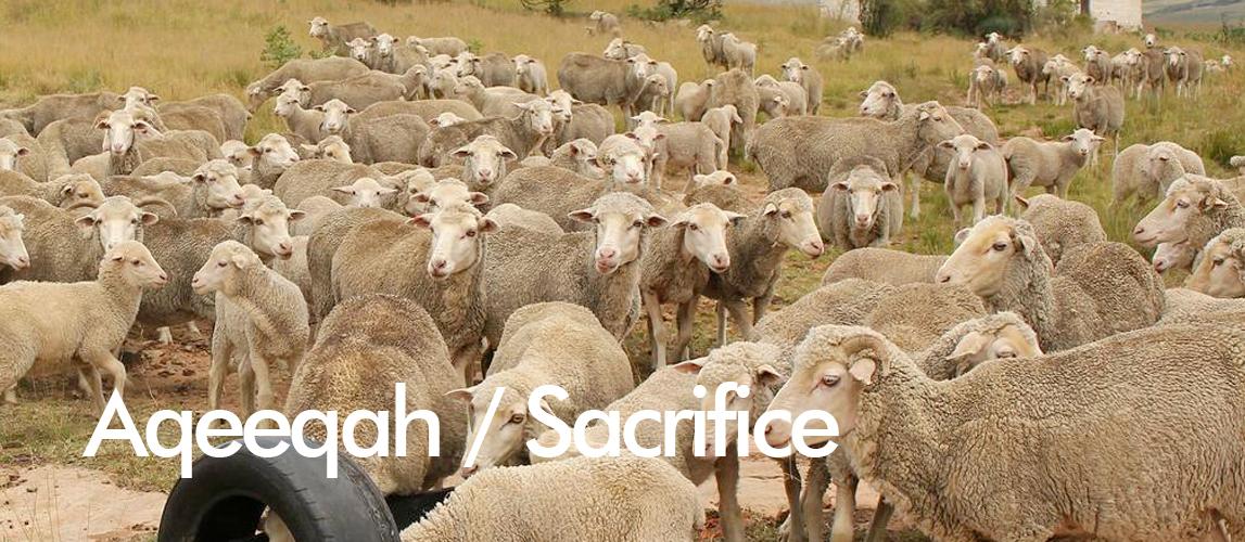 aqeeqah sacrifice